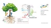Verbundvorhaben: Relevanz des Waldbodenmikrobioms (WBMB) für Nährstoffkreisläufe und Einflüsse von Baumart und Klima: Teilvorhaben 1: Bedeutung der Bakterien und Pilze für Nährstoffkreisläufe in sauren Waldböden